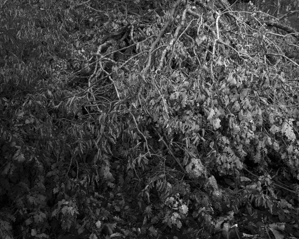 """Photographie de la série """"Sentiers"""".  Un projet en cours autour de la vie sourde d'une forêt au fil des saisons. 2021."""